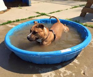 Agway enjoying a dip!
