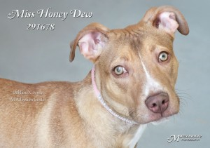 Honey Dew (Photo: Mutzenmore Photography)