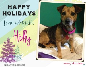 Holly, rescued January 2014