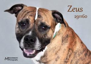 Zeus 291160 u00A9 2015 Mutzenmore Photography