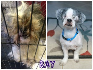 Ray Before & After